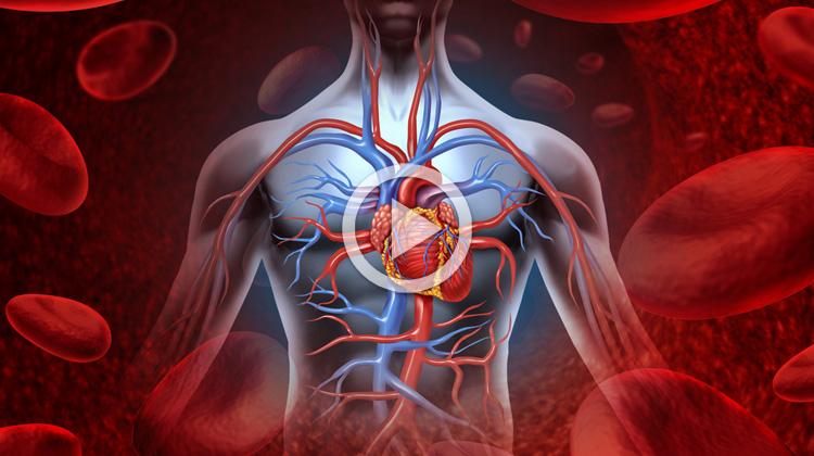 Detoxikace organismu a účinky magnetoterapie